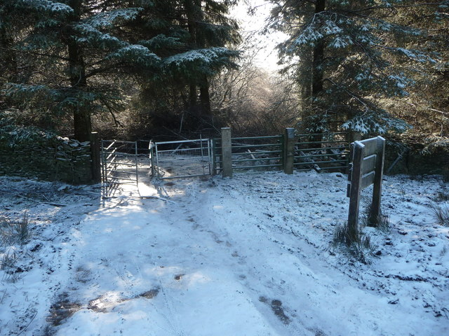 Path into forestry off Mynydd Maen Common