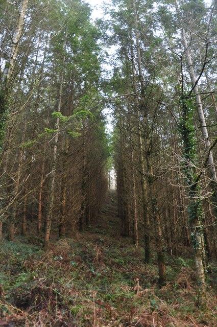 Mid Devon : Upcott Wood