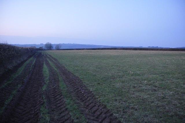 Mid Devon : Grassy Field & Tractor Track