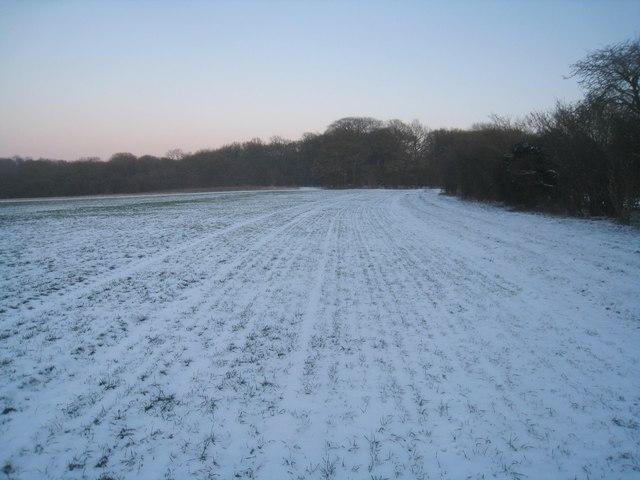 Field by Bramdown Copse