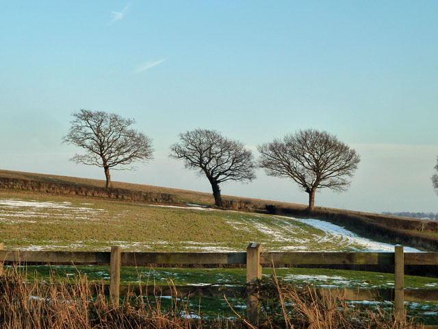 Three hedgerow trees