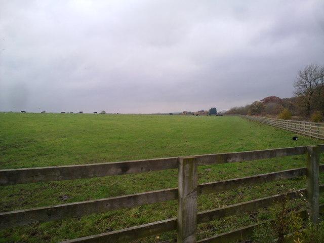 Field near Delves Lane