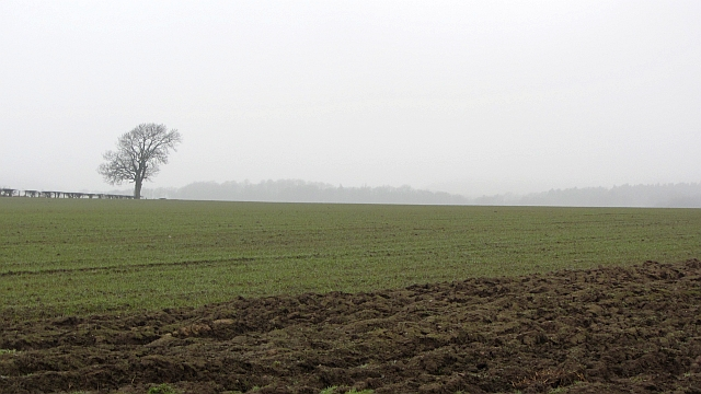 Arable land near Letham