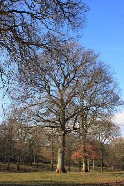 Withymoor Wood near Beavan's Hill