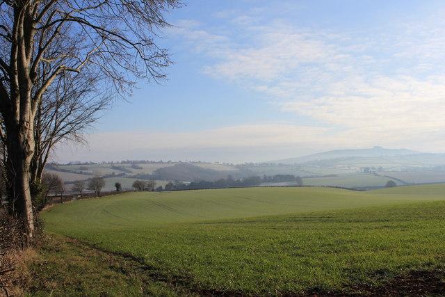 Grassland in winter near Bromsash