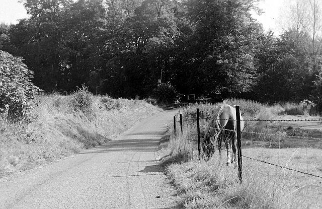 Near Great Pennys Farm