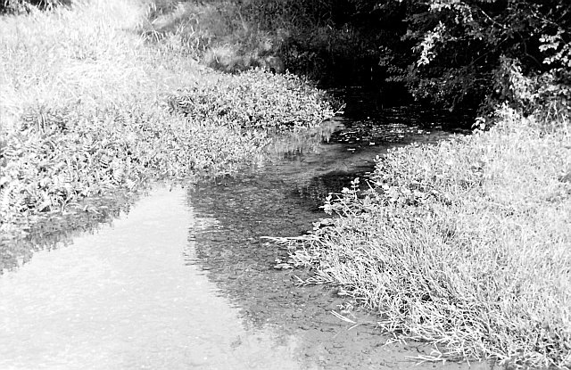 River Ash at Hadham Cross