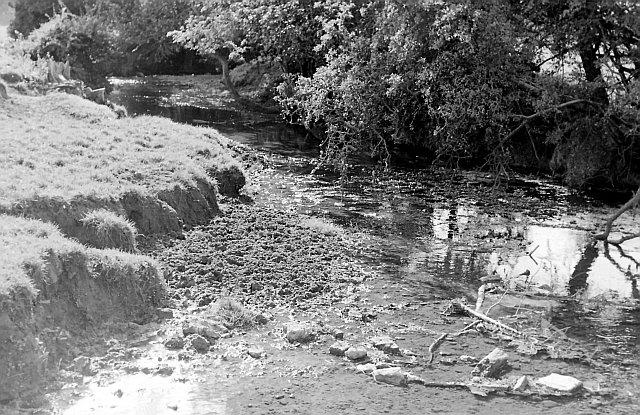 River Ash at Hadham Cross