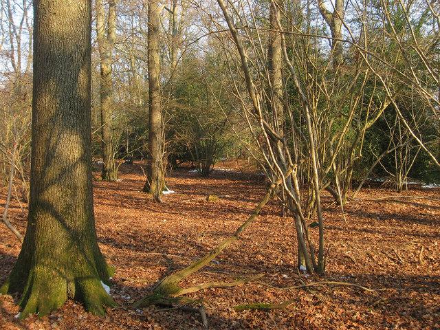 Nash Street Wood