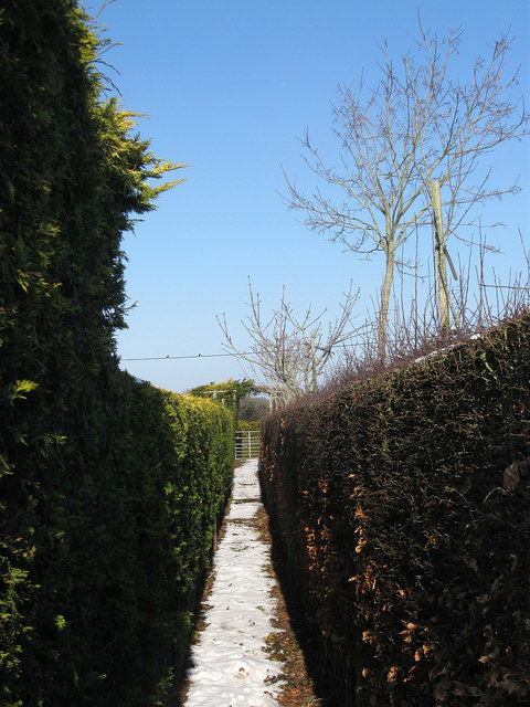 Footpath, The Dicker