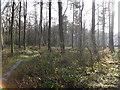 SE2704 : Lindley Wood, near Silkstone Common by Samantha Waddington