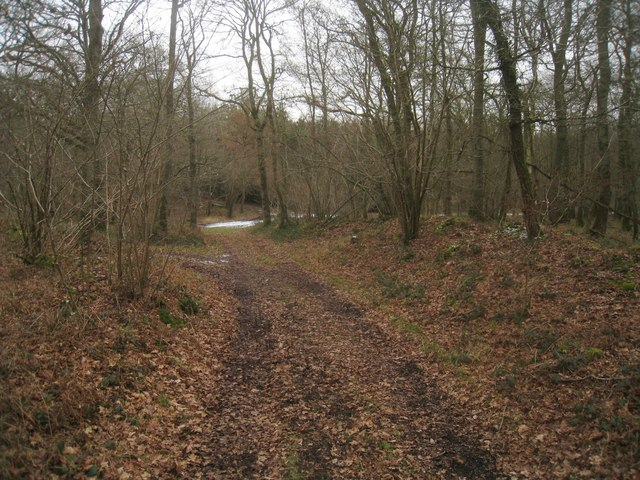 Path in Beechen Copse (Harewood Forest)