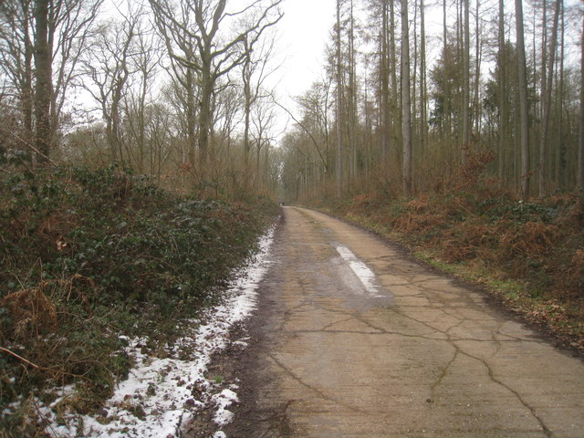 Paved track - Furzy Croft Copse