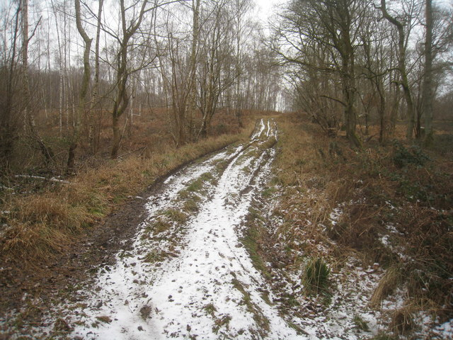 Foresters track - Hartway Copse
