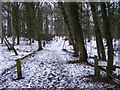 SO8791 : Himley Plantation Path by Gordon Griffiths