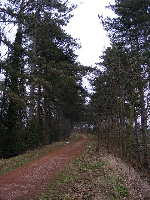 Pine Tree Track