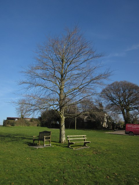 Tree and seats on the green, Broadwoodwidger
