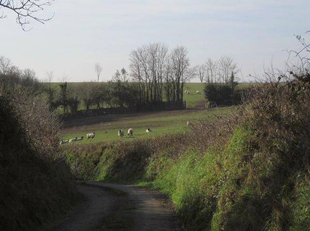 Field and lane, Broadwoodwidger