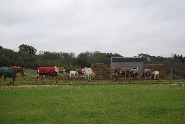 Horses, Buckhole Farm