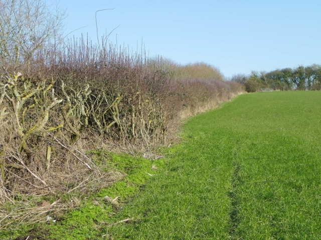 Hedge, St James's Common