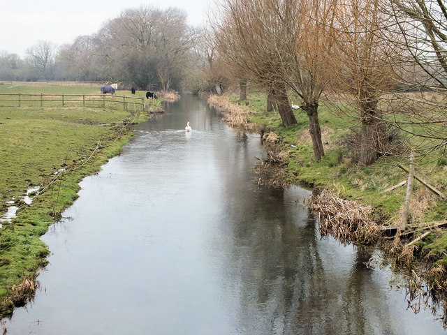Swan on an Avon tributary