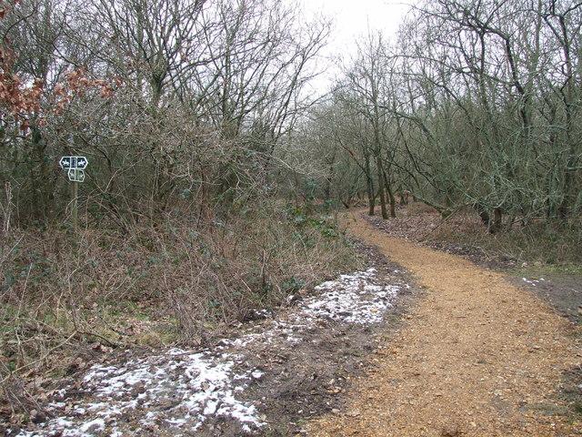 Bridleway In Potterne Park
