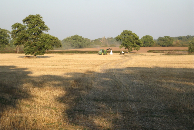 Field north of Five Acre Wood