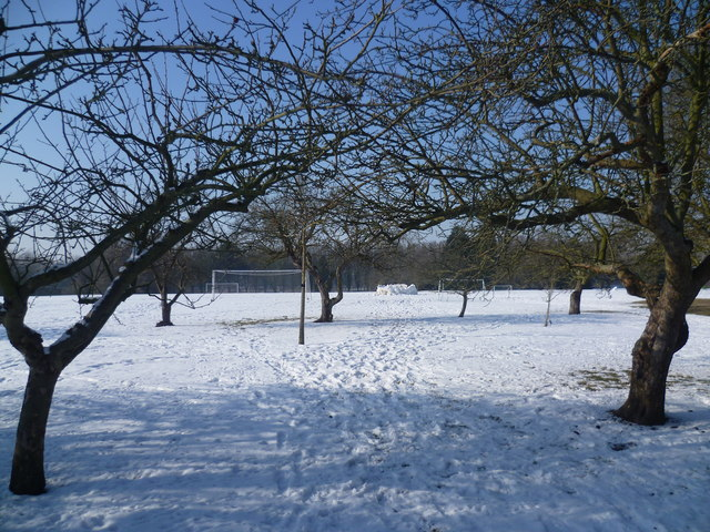 The playing fields at Homerton College from the orchard