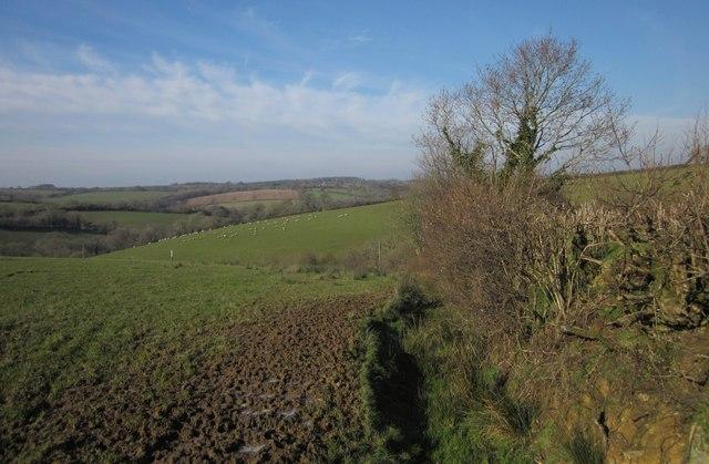 Edge of field near Broadwoodwidger