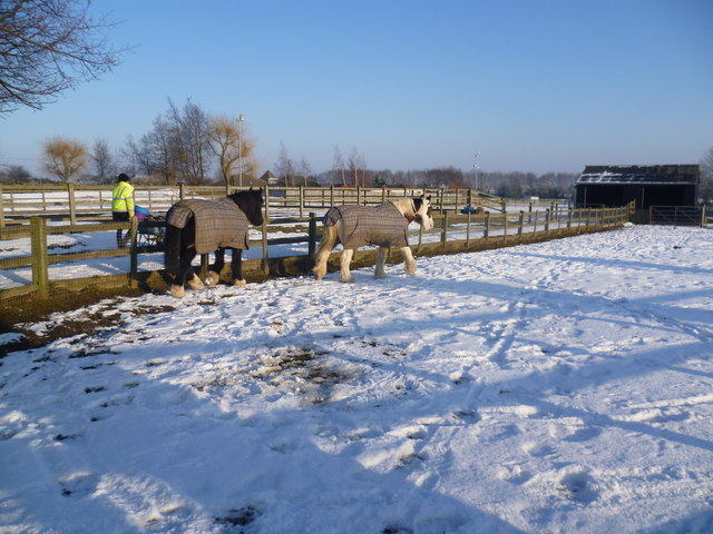 Horses in the snow at Wood Green Animal Shelter
