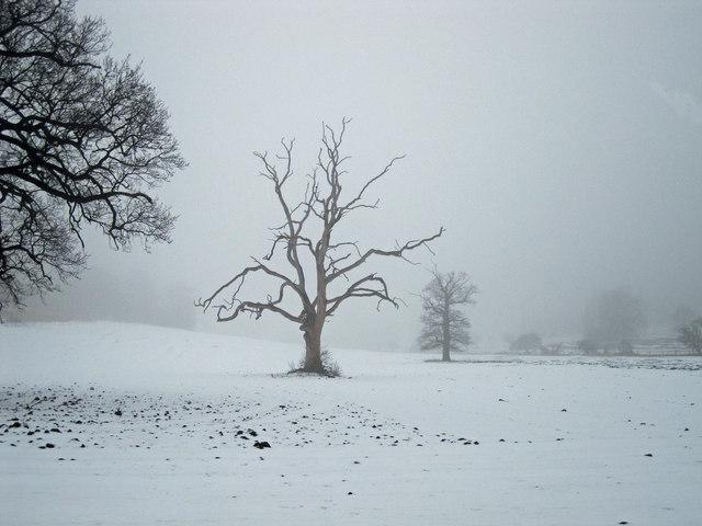 Lone tree in Ickworth Park