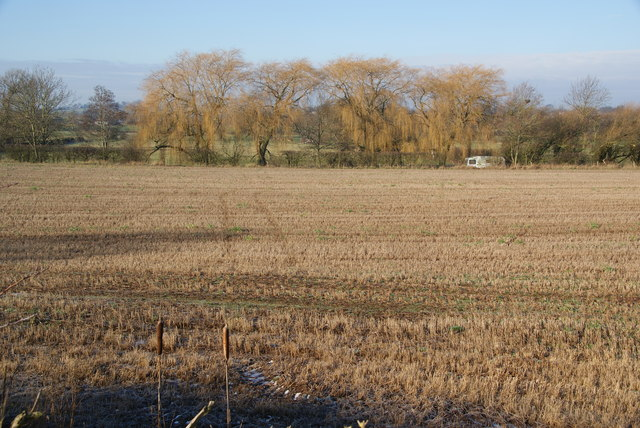 Harvested field and willows near Roseford Farm
