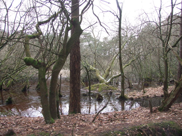 Pond, North Of Lower Common