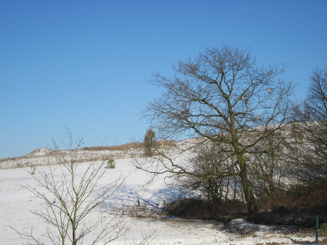 Marlbrook Tip In Winter