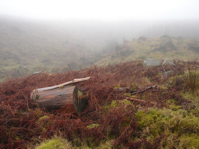 Forestry works in a mist
