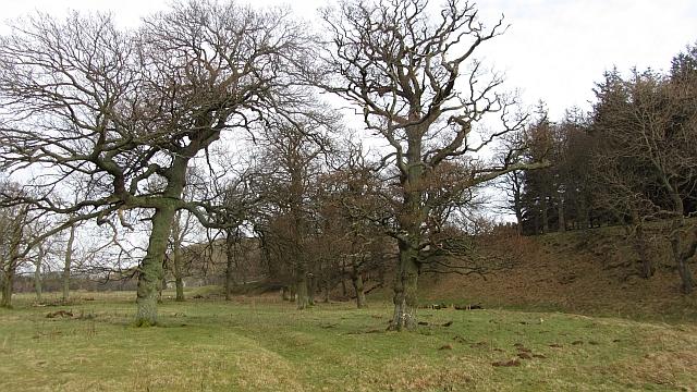 Oak wood, Castlehill