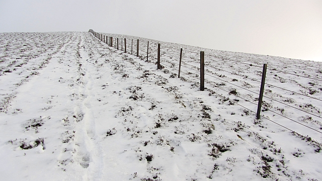 Fence, Broom Hill