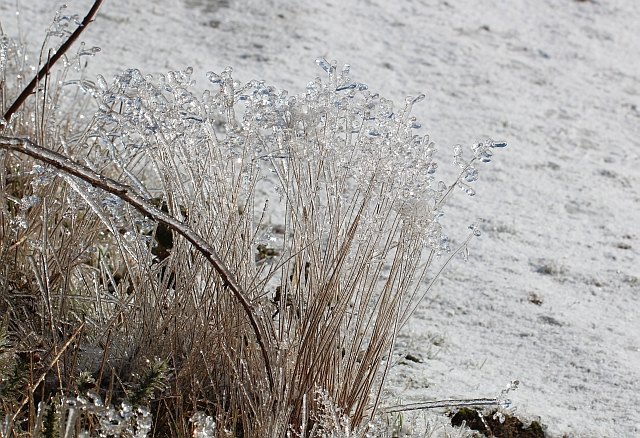 Iced grass on the Malvern Hills