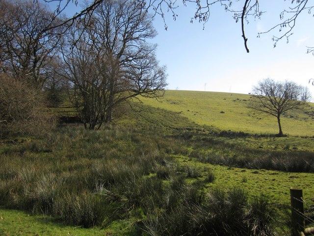 Rushy meadow below Rexton