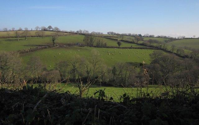 Valley near Upcott Mill