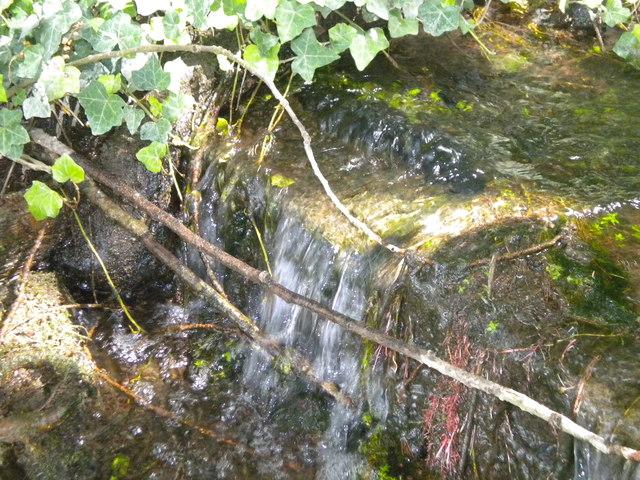 Spring in Sudbury Common Lands Nature Reserve