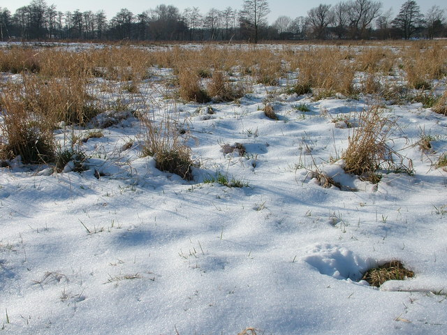 Snowy flood plain