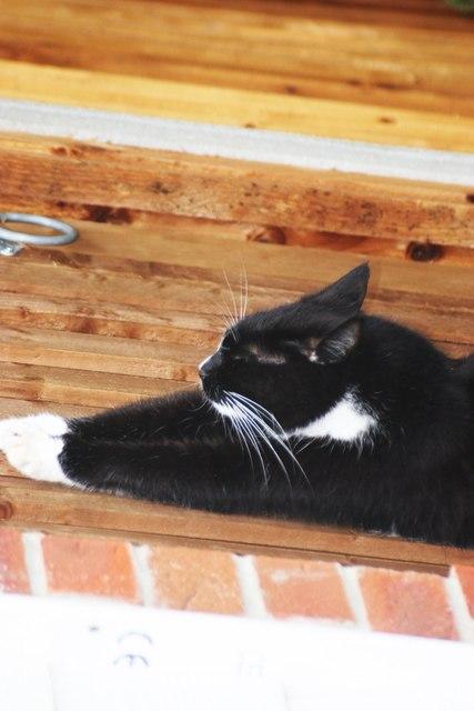 My cat Jingle stretching