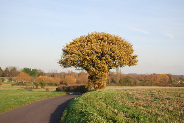 A fine tree by One Tree Rd