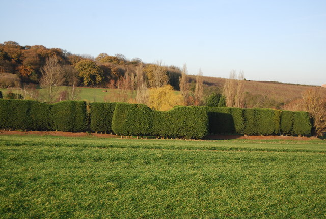 A well tended hedge