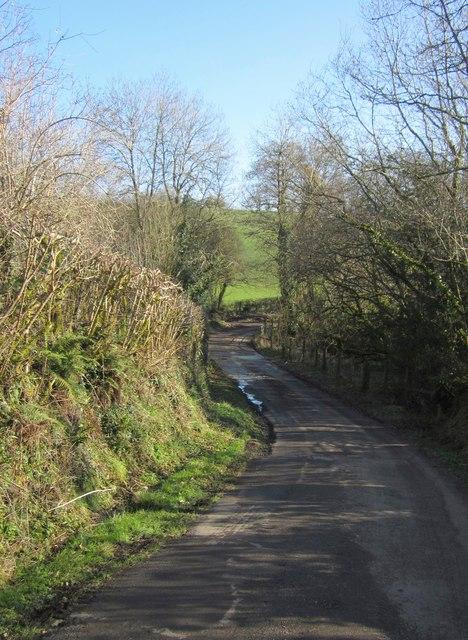 Lane below Buddle