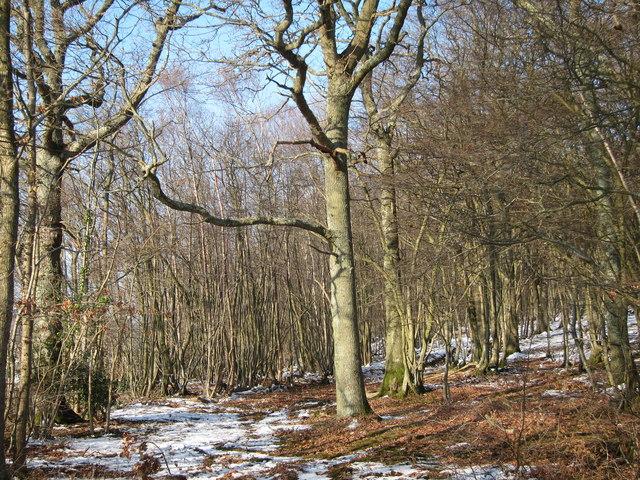 Horn's Wood