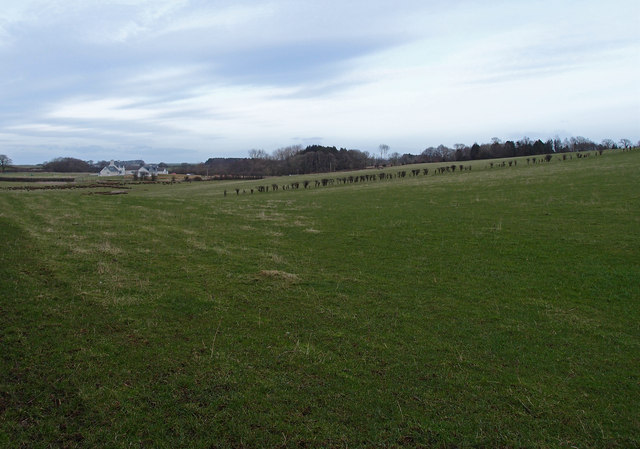Farmland near Cloncaird