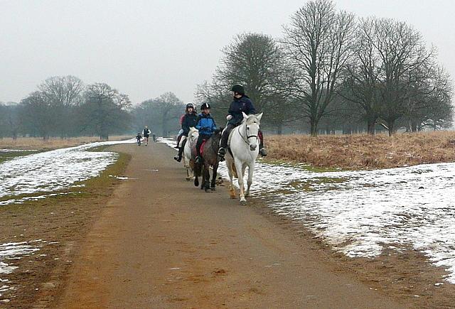 Ponies in Richmond Park