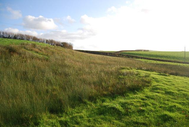 Marsh on a hillside